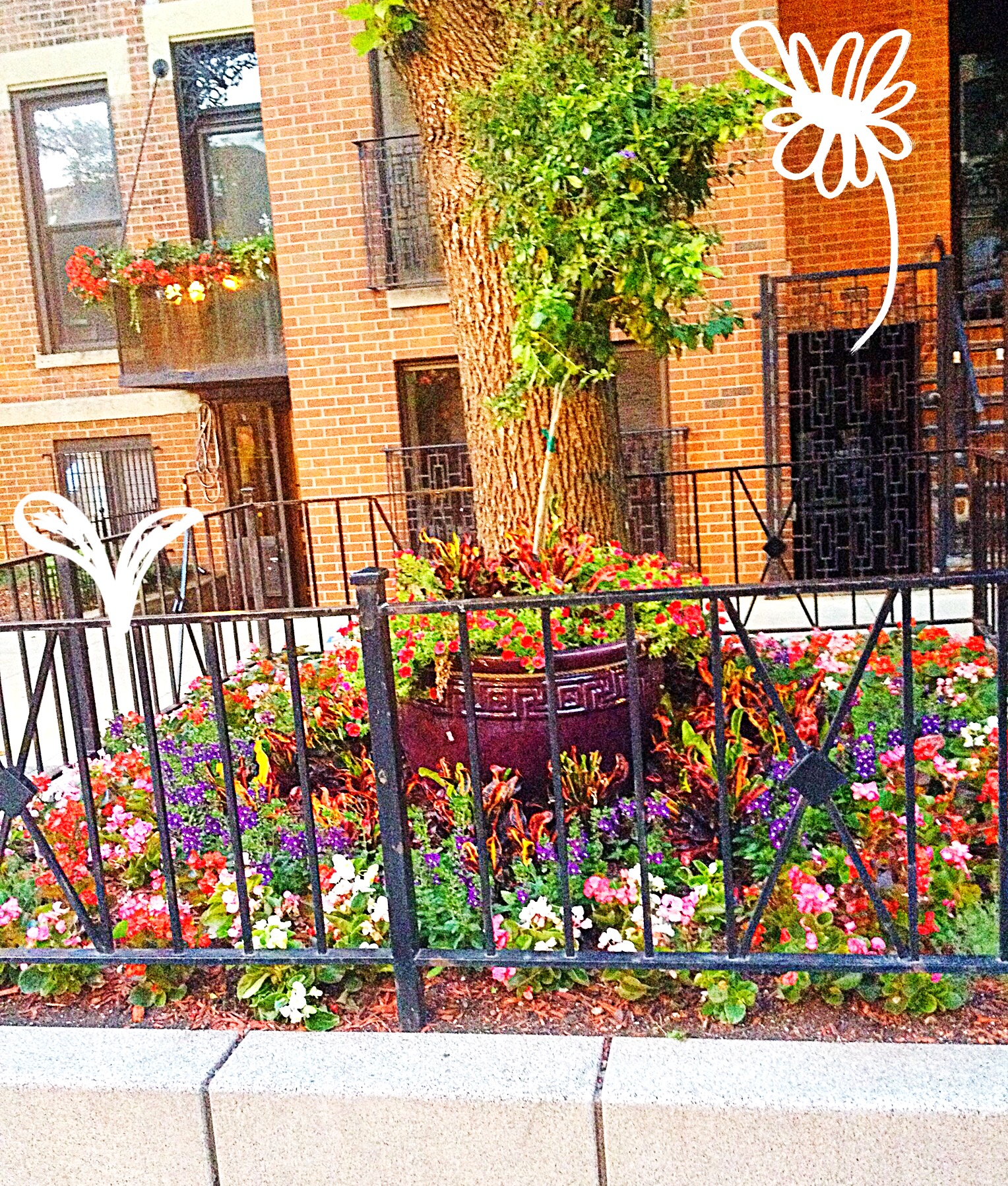 Flower plantings in Chicago's Old Town