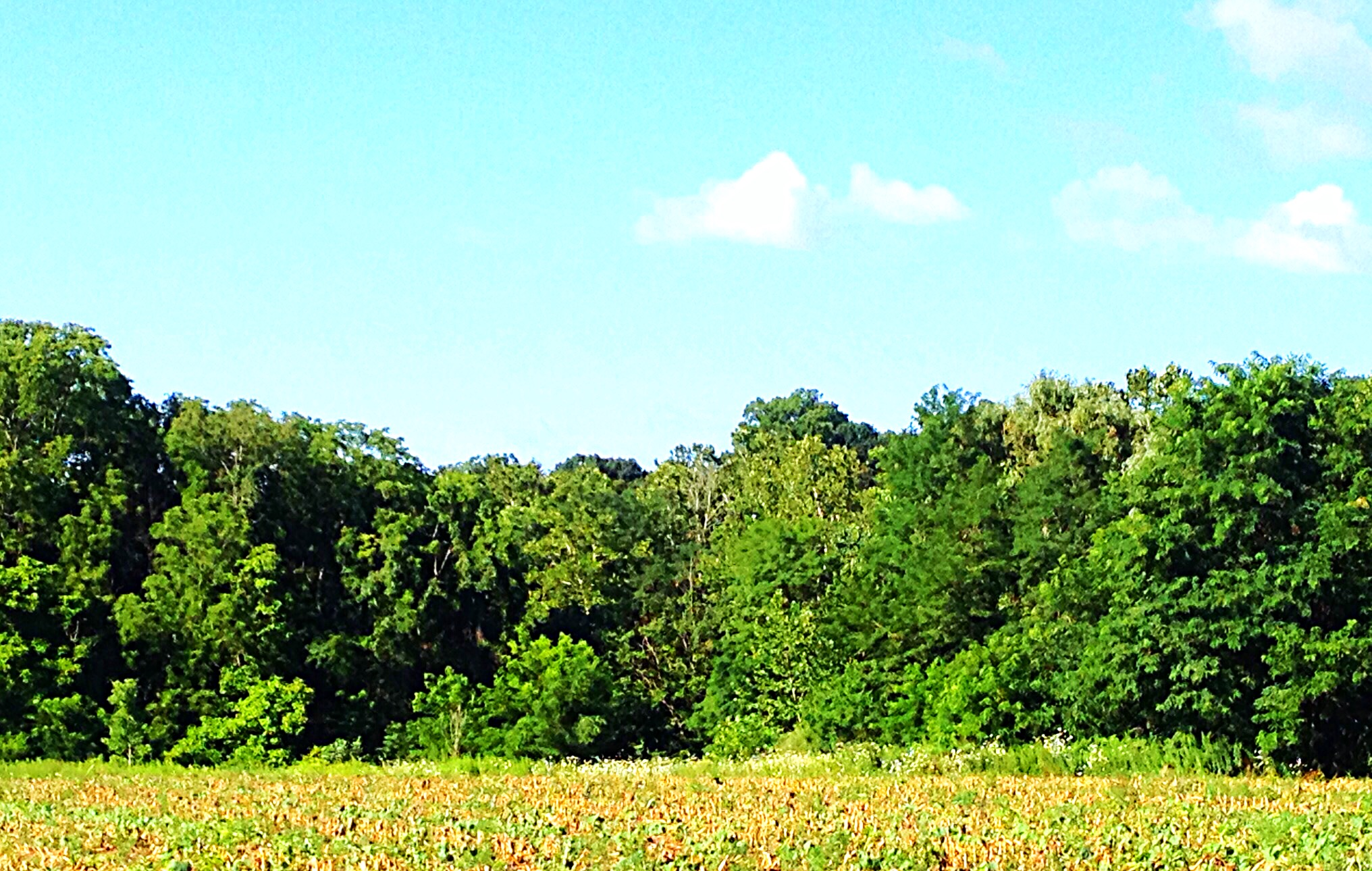 photo of meadow bordered by woods