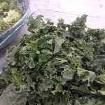 kale should be chopped into small pieces