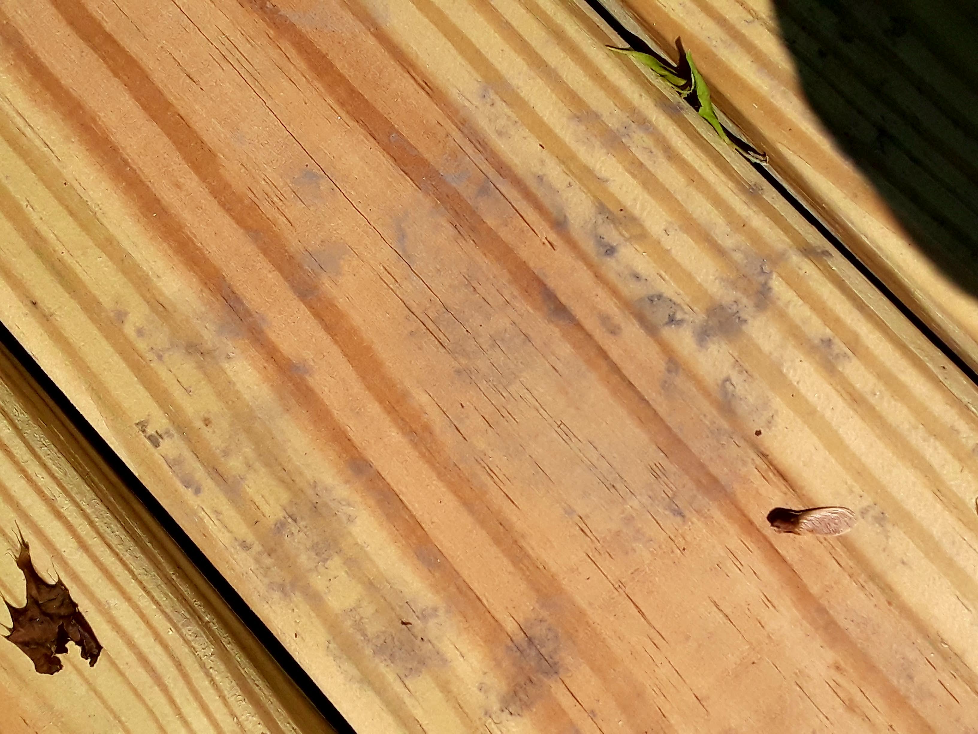 Bear print on wooden bridge slat.