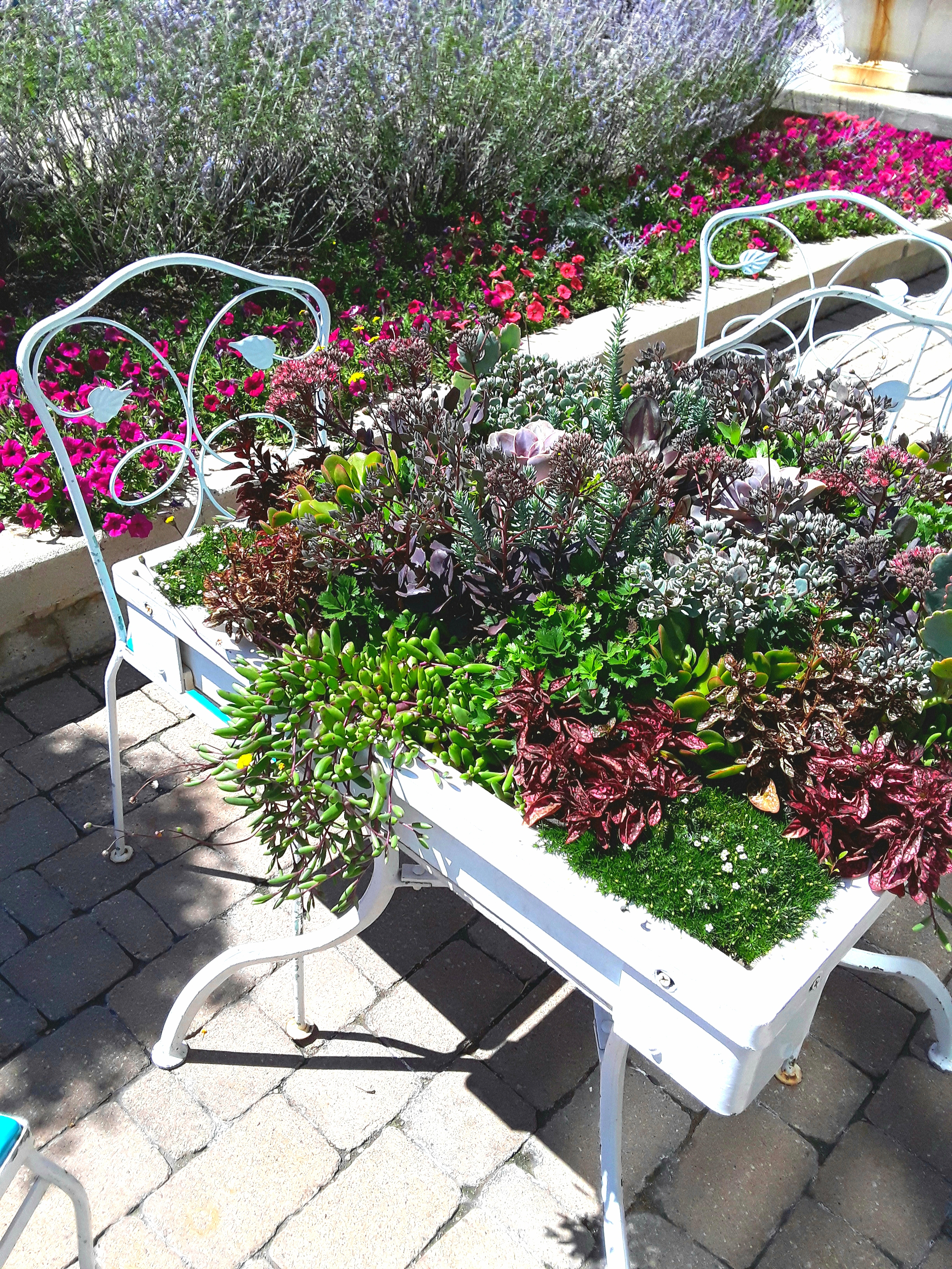 An old iron bistro set is painted white. The top of the table is covered with plantings of succulents.