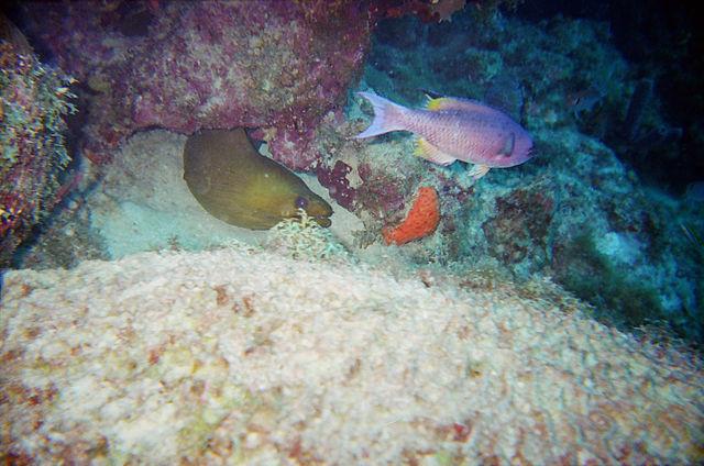 tropical fish swimming