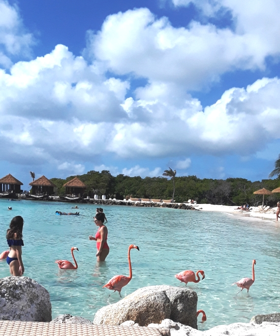 Taking selfies in the water with flamingo provides entertainment for everyone.