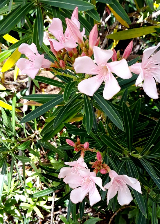 tropical flowers, pink