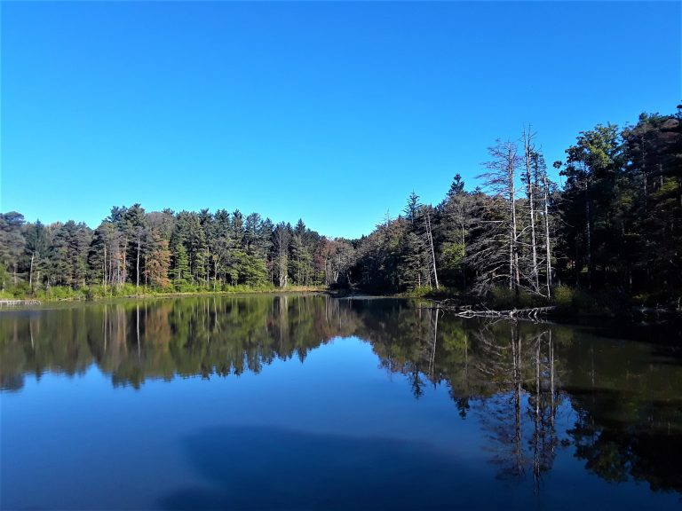 Lake Linnea water reflects the trees surrounding it