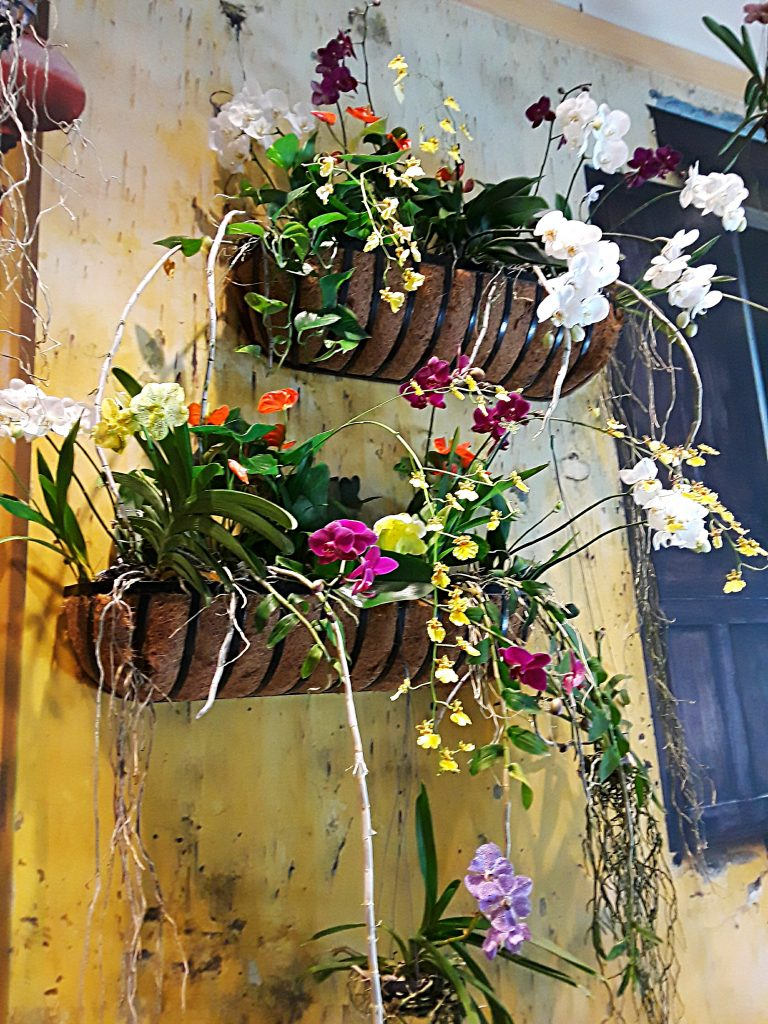 white, pink, and yellow orchids are planted in sisal lined flower boxes