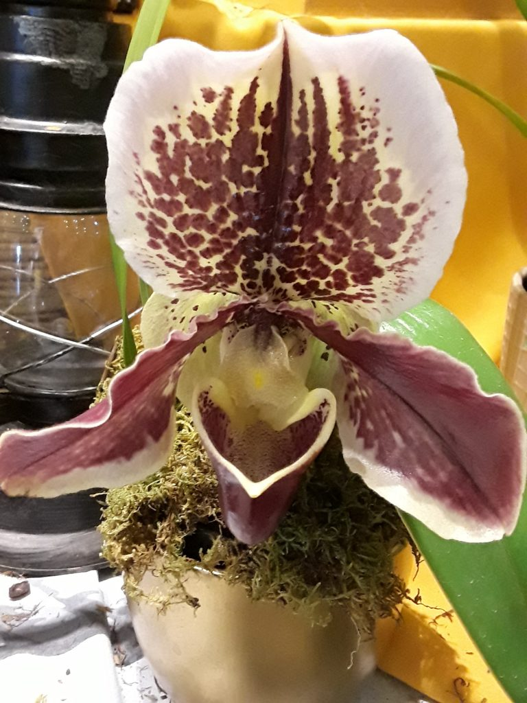 a large orchid bloom reminds us of the garden in Alice in Wonderland