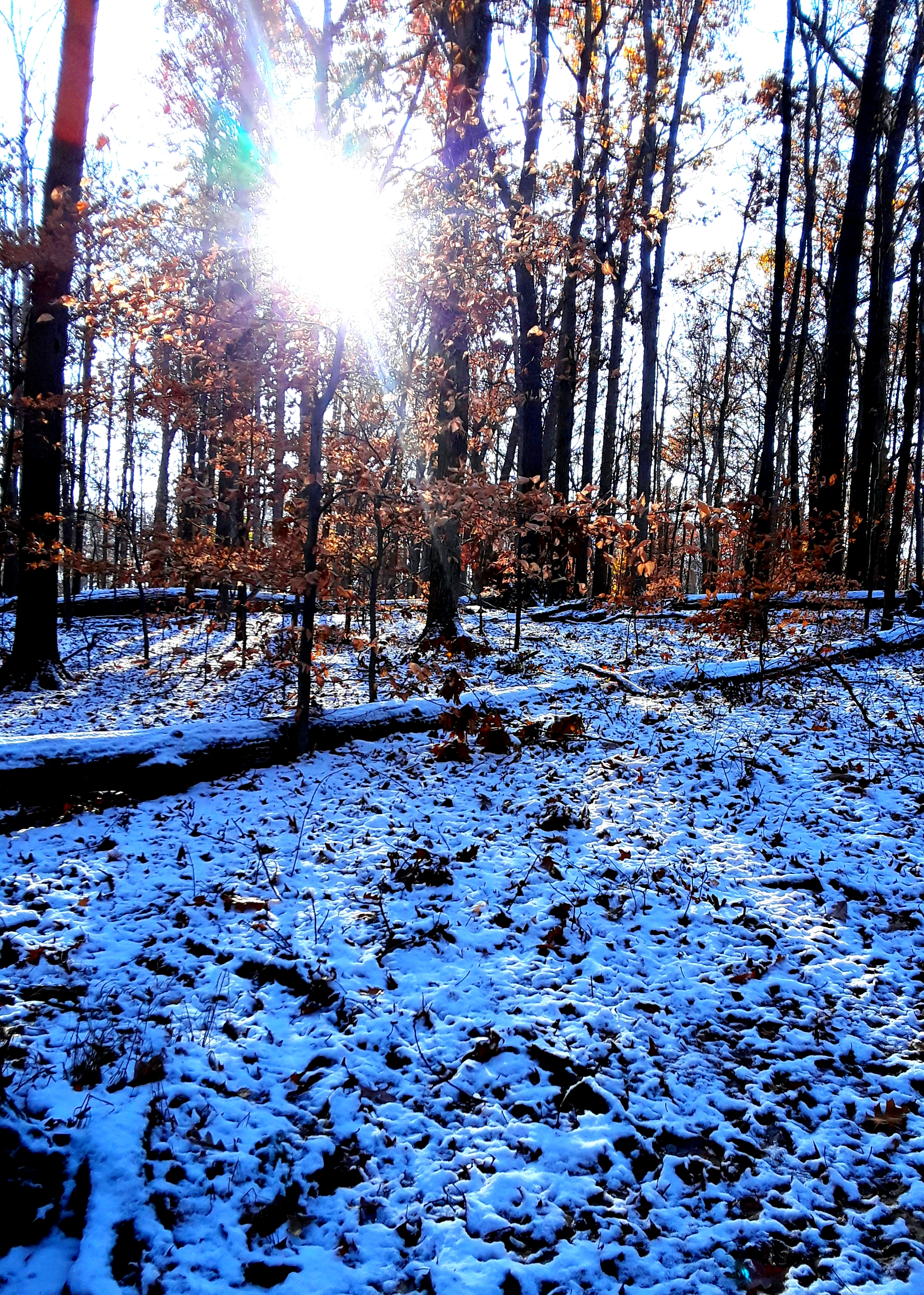 trees with fall foliage, and ground with snow