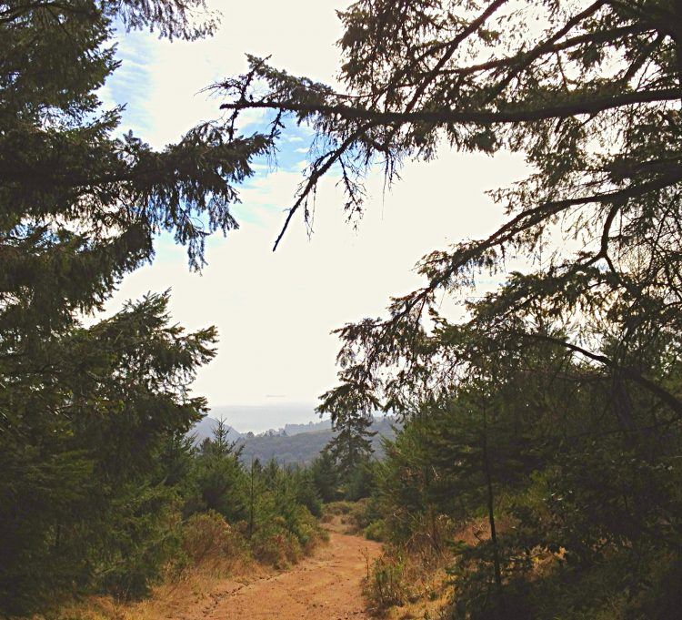 A misty view of the Pacific from the Main Trail to the Hillside Trail