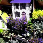 A blue roofed mini cottage has blue lobelia in front.