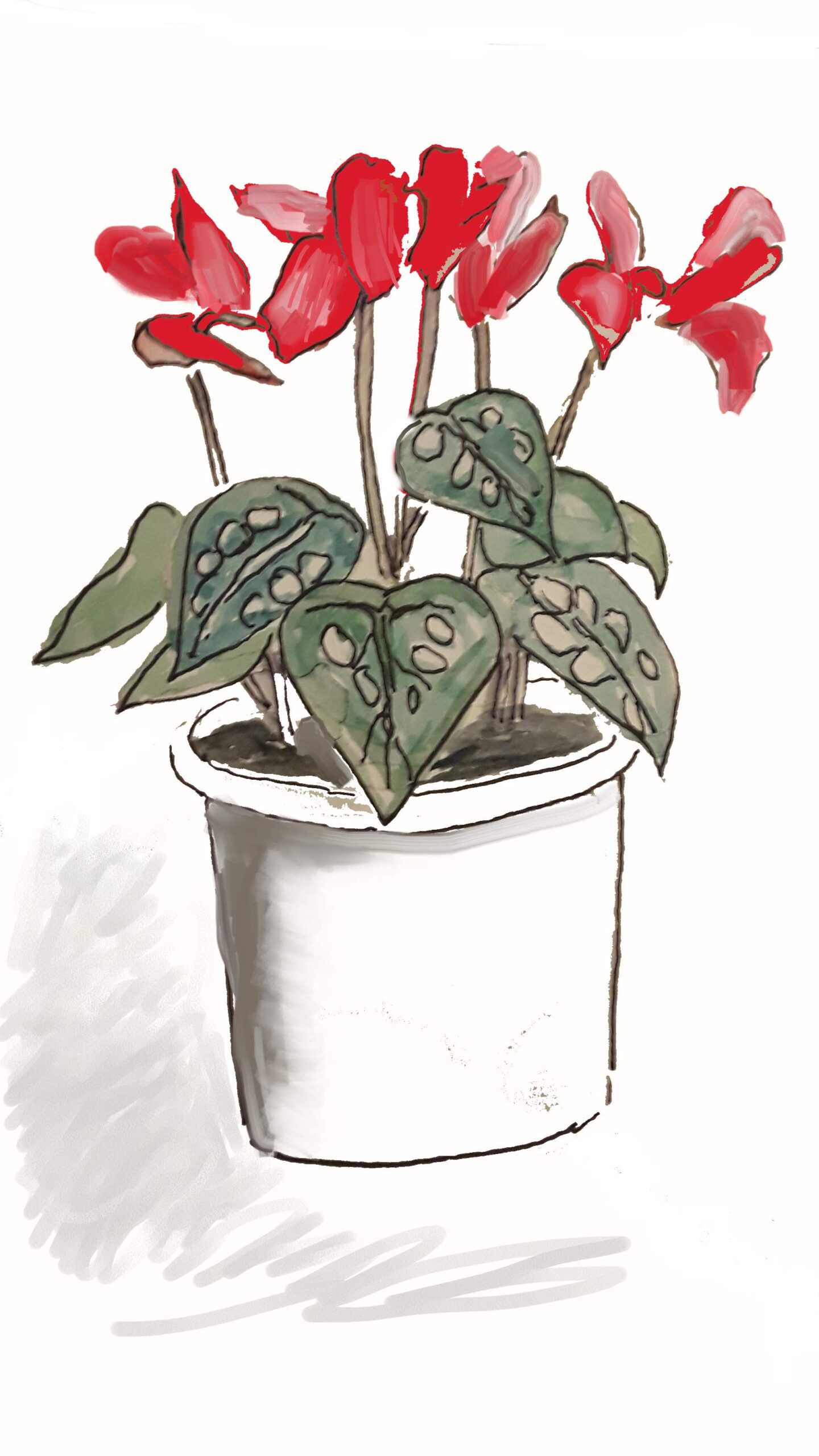 watercolor of red and pink potted cyclamen